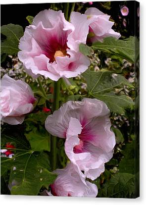 Rose Pink Hollyhocks Canvas Print