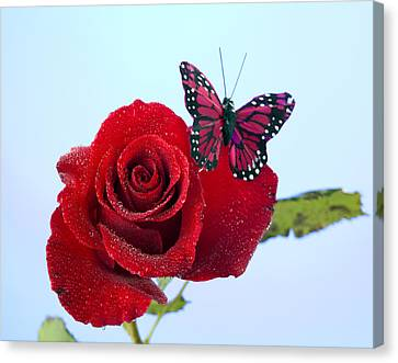 Rose Red Butterfly Isolated On Blue Canvas Print by M K  Miller