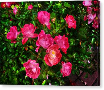 Roses Bush Canvas Print by Aleksandr Volkov