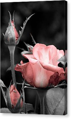 Canvas Print featuring the photograph Roses In Pink And Gray by Michelle Joseph-Long