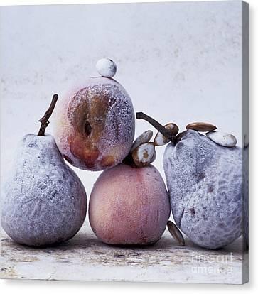 Rotten Pears And Apple Canvas Print by Bernard Jaubert