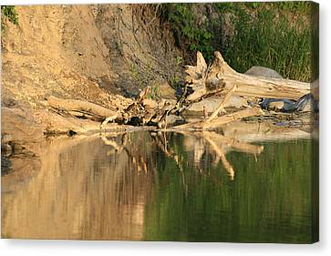 Rouge River Reflections One Canvas Print by Alan Rutherford