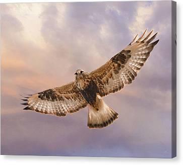 Rough Legged Hawk Canvas Print