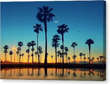 Row Of Palm Trees Canvas Print by Lee Sie Photography