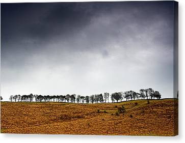 Row Of Trees In A Field, Yorkshire Canvas Print by John Short
