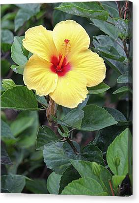Canvas Print featuring the photograph Royal Hibiscus by Craig Wood