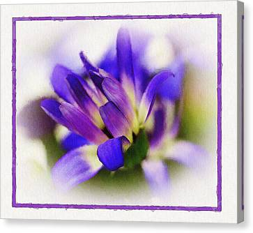 Royal Purple Canvas Print by Judi Bagwell
