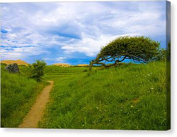 Rubjerg Path Canvas Print