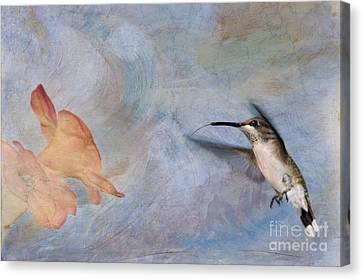 Feeding Canvas Print - Ruby Throated Hummingbird 2 by Betty LaRue