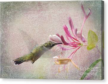 Feeding Canvas Print - Ruby Throated Hummingbird #3 by Betty LaRue