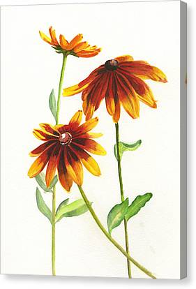 Rudbeckia Hirta Canvas Print by Sharon Freeman