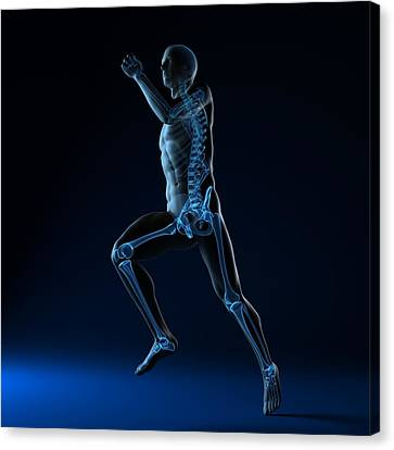 Running Skeleton, Artwork Canvas Print by Sciepro