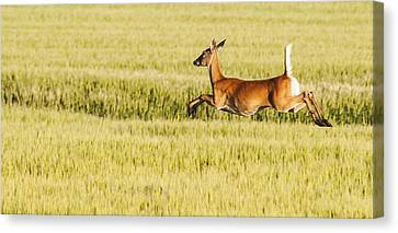 Running The Field Canvas Print by Don Durfee