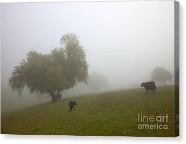 Rural Fog Canvas Print by Mike  Dawson