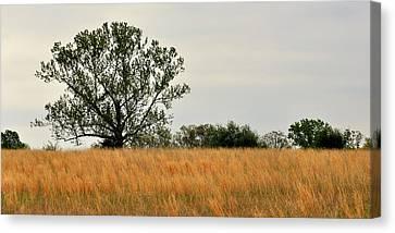 Rural Landscape Canvas Print by Marty Koch