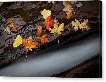Rushing Autumn Canvas Print by Jim Speth