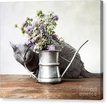 Watering Can Canvas Print - Russian Blue 03 by Nailia Schwarz