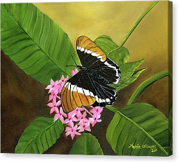 Rusty-tipped Butterfly  Canvas Print by Maria Williams