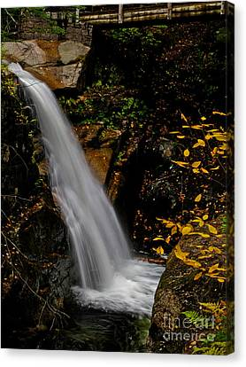 Sabbaday Falls In Nh Canvas Print by Scott Moore