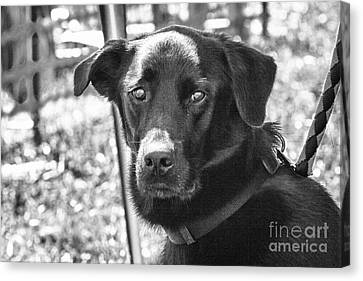 Canvas Print featuring the photograph Sad Eyes by Eunice Gibb
