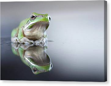 Sad Green Frog Canvas Print by Darren Iz Photography