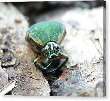 Canvas Print featuring the photograph Sad June Bug by Chad and Stacey Hall