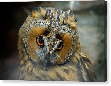 Sad Owl Canvas Print