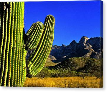 Canvas Print featuring the photograph Saguaro And Catalina Mountains by Jim Moore