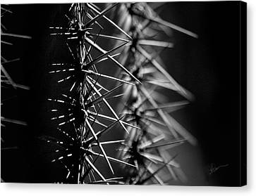Saguaro Nights Canvas Print by Vicki Pelham