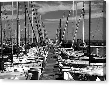 Sail Boats At San Francisco China Basin Pier 42 With The Bay Bridge In The Background . 7d7166 Canvas Print by Wingsdomain Art and Photography