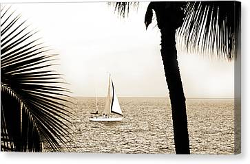 Sailing The Pacific Canvas Print