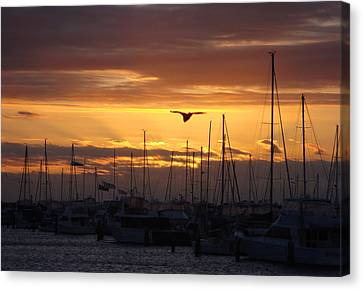 Sails At Sunset Canvas Print by Kelly Jones