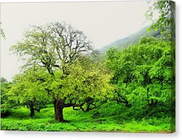 Salalah Green Canvas Print