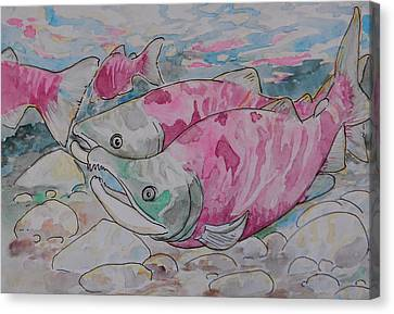 Salmon Spawn Canvas Print