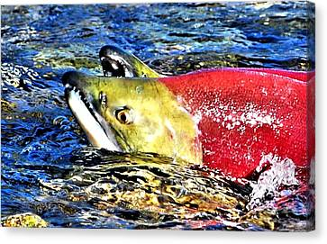 Salmon Canvas Print - Salmon Struggles by Don Mann