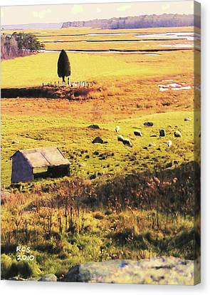 Salt Marsh Pasture Canvas Print