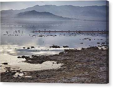 Salton Sea Birds Canvas Print by Linda Dunn