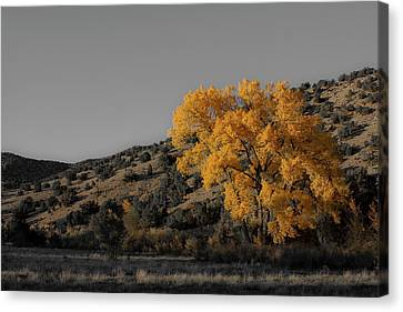 Salto's Tree Canvas Print by Atom Crawford