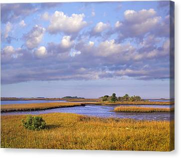 Saltwater Marshes At Cedar Key Florida Canvas Print by Tim Fitzharris
