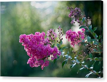 Saluda Pink Canvas Print by Melissa Wyatt