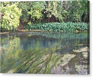 Canvas Print featuring the photograph San Marcos River Texas by Elizabeth  Sullivan