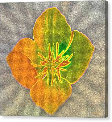 Sand Flower Canvas Print by Mitch Shindelbower