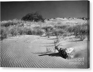Sand Hill Monochrome Canvas Print by Susan Isakson