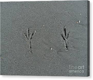 Sand Prints Canvas Print by Jennifer Kelly