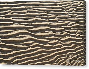 Sand Ripples Canvas Print by Photo Researchers, Inc.