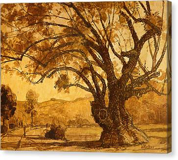 Sanmarin California Tree Canvas Print by Bill Mather