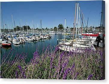 Santa Cruz Harbor - California Canvas Print