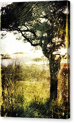 Savana Canvas Print by Andrea Barbieri