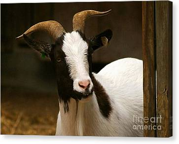 Canvas Print featuring the photograph Say Cheese by Julie Clements