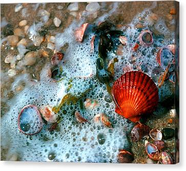 Canvas Print featuring the photograph Scallop And Seaweed 11c by Gerry Gantt